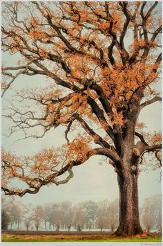 Photograph Autumn Branch by Thijs Kupers on Giant Tree, Old Trees, Fall Pictures, Growing Tree, Art Studies, Good Old, Botany, Succulents, Illustration