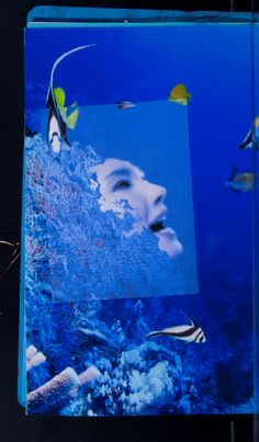 by Barbara Fletcher Lowell, MA, United States theme: Below the surface project: SBP 2011