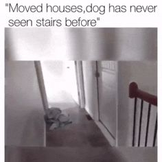 19+ RIDICULOUSLY FUNNY DOG MEMES/PIC TO MAKE YOUR STOMACH HURT LAUGHING http://omgshots.com/3705-19-ridiculously-lol-dog-memespics-make-your-stomach-hurt-laughing.html