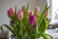 Uite ce trebuie pus in vaza - BZI. Purple Tulips, Pink Purple, Elizabeth Arden Red Door, Customer Service Jobs, Happy Spring, Spring Is Here, Blooming Flowers, Work From Home Moms, Instagram Posts