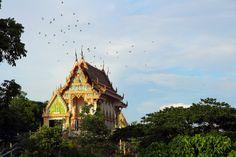 thai beauty (Khao Yai National Park Thailand 2013