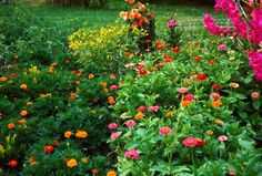 Featuring marigolds, zinnias, gladiolus, four oclocks, dahlias