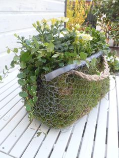 Chicken wire planter...lovely bag! More Gardens Ideas, Diy Ideas, Avid Gardens…