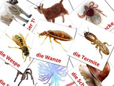 Flashcards For Kids, German Language Learning, Learn German, Free Printables, Free Printable