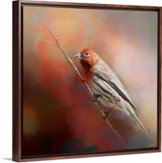 •I love when the spring sunlight comes, gently warming up the chill left behind by the vanishing winter breeze.• Male House Finch Bird art by Jai Johnson on canvas in floater frame