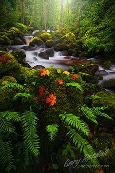 Boulder Creek in Autumn. Brightwood, Oregon