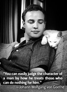 A good quote, and Brando with a cat. You can't go wrong with another tasty shot from this photo session. Extra points for those loved by cats, for cats do not give their love as easily as dogs will.