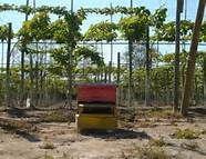 caixa com abelhas para polinizaçao...                                                                                                                                                      Mais