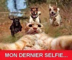 C'était... mon dernier Selfie les copains ! http://www.15heures.com/photos/cetait-mon-dernier-selfie-les-copains-5072.html #CUTE