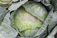 Cabbage http://www.cost278.org/cabbage-soup-diet/