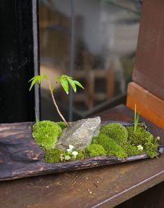 苔盆栽横 20110414