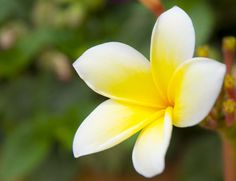 This is Plumeria who loves warm weather. But how to keep the garden in shape in May here in Texas?