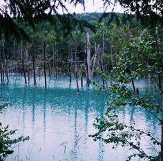 北海道、美瑛、青い池 Rolleiflex