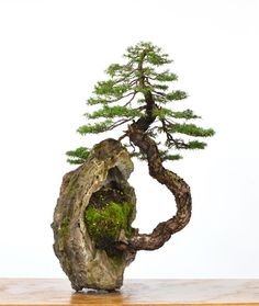 """There are no borders in bonsai. The dove of peace flies to palace as to humble house, to young as to old, to rich and poor. So does the spirit of bonsai"" - JOHN YOSHIO NAKA - Ikebana, Bonsai Tree Types, Indoor Bonsai Tree, Bonsai Trees, Mini Bonsai, Miniature Trees, Bonsai Garden, Succulents Garden, Tree Sculpture"