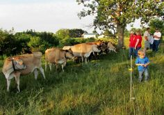 Organic Valley - Making Hay