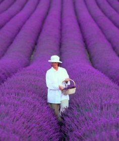 French Lavender The warm summers and mild winters make Provence the ideal location for growing lavender. No wonder the French make such wonderful perfume!
