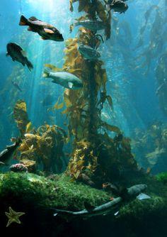 kelp art images - Google Search