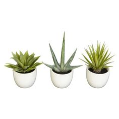 """Southwest Collection Mixed Succulents in White Pots Set of 3 - 8.5"""" (810709012361) Enjoy the simple beauty of the incredible agave plant with our three-piece southwest agave collection. Each piece is a sample of the different varieties of agave. Enjoy a 5.5 inch high thick green leaved agave, the sparsely leaved 8.5 high version, or the multi leaved 7 inch high spiky piece. Put them together or around the house for a southwestern or central american feel."""