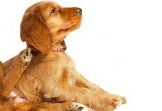 Livre seu animal de estimação da coceira | Petzlife Brasil