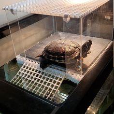 Large Turtle Tower Above Tank Acrylic Model Turtle Basking Turtle Tank Accessories, Aquarium Accessories, Turtle Basking Platform, Turtle Dock, Snake Enclosure, Turtle Aquarium, Pet Turtle, Freshwater Aquarium Fish, Life Aquatic