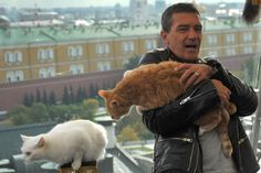 Banderas, who reprises his role as Puss in this prequel to the Shrek films, proved to be quite the natural with cats and took advantage of the opportunity to showcase his natural affinity with the creatures. Salma Hayek (Kitty Softpaws in the movie) displayed a similar level of