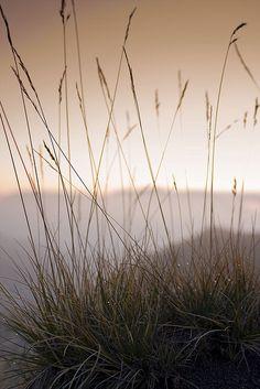 Sunrise across grass