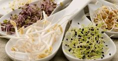 Grow your own sprouts with our Seed for Sprouting Starter Kit. Kit includes three sprout lids and 5 sample packs of microgreens and herbs Eating Raw, Health Eating, Raw Food Recipes, Cooking Recipes, Healthy Recipes, Growing Vegetables, Fruits And Vegetables, Sprouts Vegetable, Wheat Grass