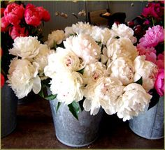 Beautiful peonies. Looking for a painting like this.