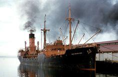 MV Waimarino - Hobart, May 1956.