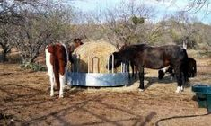 New solutions Horse Hay, Horses, Hay Feeder, Animals, Products, Animales, Animaux, Animal, Animais