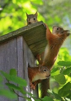 Anyone home? We need to check your house now #funnyanimals #animalsfunny #funnysquirrels