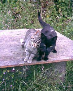 Cute Kitties Photograph