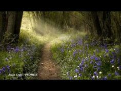 ▶ PROMISE by Brian Crain - YouTube