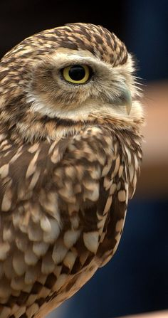Owl sees and knows the truth. It's ability to navigate through the darkest night and bring back nourishment for itself and others is the foundation of this essence. When you have lost your way, owl essence will guide you back to your proper path and wisdom.