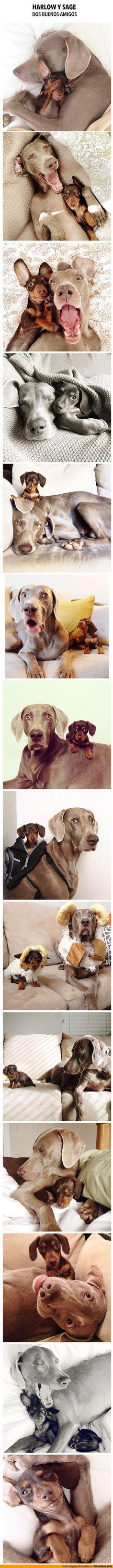 best friends...cute!