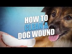 Learning how to clean a dog wound is essential information that every pet parent should know. You never when it may come in handy to help your pup. Dog Training Classes, Dog Training Tips, Tick Removal Dog, First Aid For Dogs, Puppy Supplies, Wound Care, Pet Life, Dog Owners, Dogs And Puppies