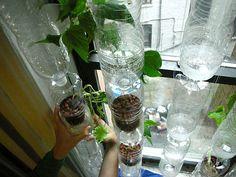 Horta na janela dentro da garrafa pet, faça a sua - Vila do Artesão