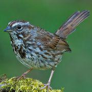 Bird Diet Types