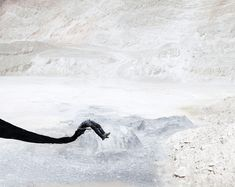 "Juxtapoz Magazine - ""Dignity,"" Photographs by Bence Bakonyi Artistic Photography, Fine Art Photography, Nature Photography, Contemporary Photography, Photo Manipulation, Surrealism, Cool Photos, Behance, Black And White"