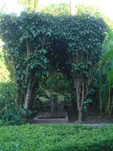 Creative use of foliage for outdoor shower Outdoor Shower Inspiration, Shed Cabin, Garden Art, Garden Ideas, Outdoor Showers, Gate House, Big Leaves, Exterior, Pool Houses