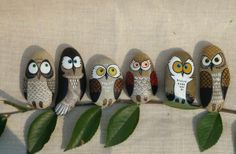 ...Six owls out on a limb!