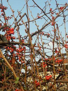 Primavera a Rivalta di Torino 1