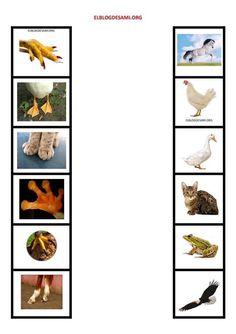 Preschool Education, Kindergarten Science, Free Preschool, Preschool Worksheets, Preschool Activities, Montessori Trays, Montessori Classroom, Montessori Materials, Animal Activities For Kids