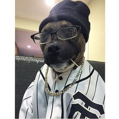 #pitbull #pitbulls #instadog #puppy #pup #cute #eyes #instagood…