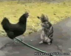 In Limburg is de wilde kat weer opgedoken. Is op internet niks nieuws, wilde katten.