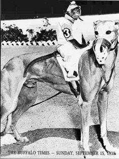 Vintage photos of greyhounds with monkey jockeys