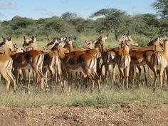 Serengeti National Park, Tanzania, Camel, National Parks, Animals, Animales, Animaux, Camels, Animal