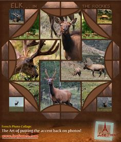 Photo collage ~ created by Becky, Lea France designer ~ using Digital Stained Glass.