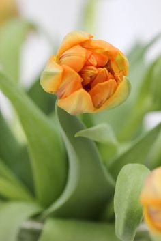 Creative with Flowers-# 25-Double Princess Tulips-Ingrid Henningsson-Of Spring and Summer