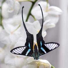 Paper Butterflies, Butterfly, Moon Moth, Art Folder, Pink Moon, Paper Cutting, Prints, Prototype 2, Project Proposal